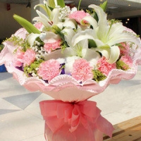 Pink Carnations with stargaizer
